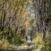 Грибники в осеннем лесу :: Марк Э