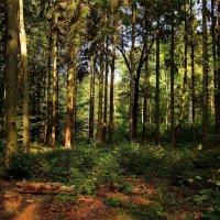 Осень в лесу :: Alexander