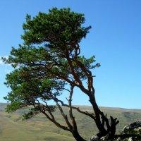 Над горной равниной Адыгеи :: Надежда