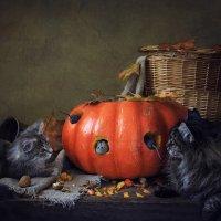 Кошки-мышки :: Ирина Приходько