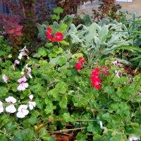 Сентябрь,городские цветы... :: Тамара (st.tamara)