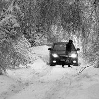 После ледяного дождя в Подмосковье. :: юрий
