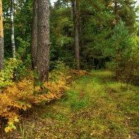 Лесными дорожками... :: Алла Кочергина