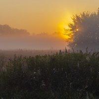 Светлое утро :: Сергей Корнев