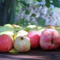 Яблочная свежесть :: Наталья