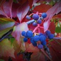 Краски осени... :: Valentina