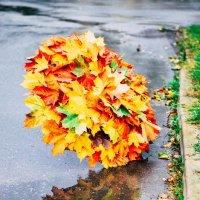 Осенний зонт. :: Марина Романова