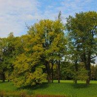 И осень в парк пришла.... :: Tatiana Markova
