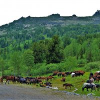 Табун в горах :: Сергей Чиняев