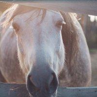 Конь в закате :: Александр Решетников