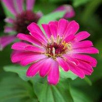 Последнее цветение.. :: Андрей Заломленков