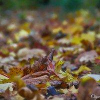 Осень... :: Ольга Бархатова