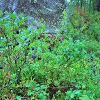 В лесах Прионежья :: Валерий Талашов