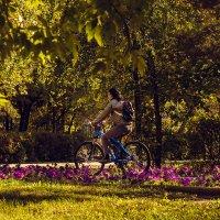 Осень в парке :: Андрей Липов
