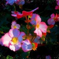 Парк цветов осенью (серия) Капельки росы :: Nina Yudicheva