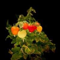 «Урожай» ) :: Андрей Окороков