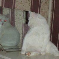 и всё таки я необычайно красив :: Ксения смирнова