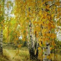 Золотая осень... :: Valentina
