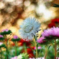 Цветы :: Юрий Фёдоров