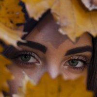 Осень :: Эдуард Малец