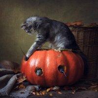 Из серии Кошки-мышки :: Ирина Приходько