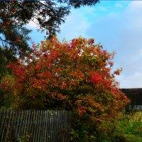 Осень на даче :: Юрий