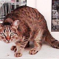 Кот живущий на подоконнике улицы :: Владимир Ростовский