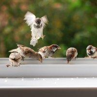 на обед :: linnud