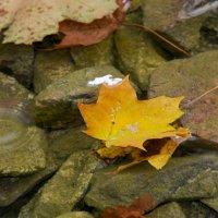 Осень :: Виктор М