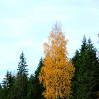 Осень :: Андрей Скорняков