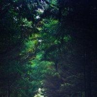 Лесной туннель :: Екатерррина Полунина
