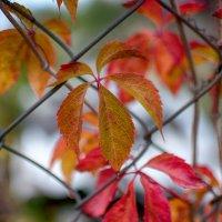краски осени :: Тася Тыжфотографиня