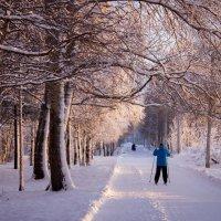 декабрь 2015, лыжник :: Ирина Кузина