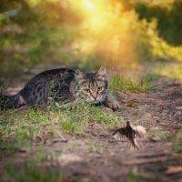 ..охота на... котов.. :: Лилия .