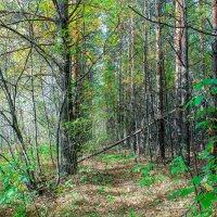 Лесной шлагбаум :: Юрий Борзов