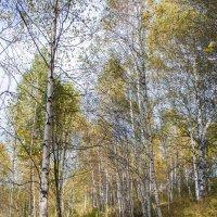 Осень :: Юрий Борзов
