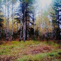 ...в осеннем лесу :: александр дмитриев