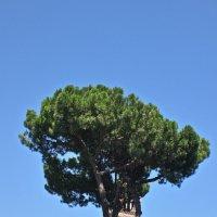 в Риме :: Елена