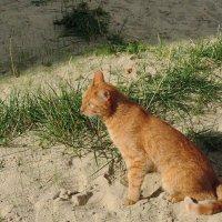 Солнечный кот греется . :: bemam *