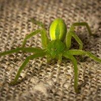 Такой вот зеленый... :: Андрей Боталов