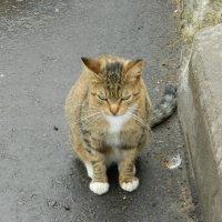 кошка :: Andrew