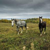 Уж небо осенью дышало... :: Владимир Хиль