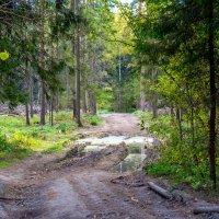 Дорога через лес :: Владимир Лазарев