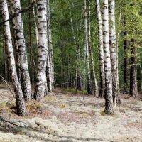 Сказочный лес. :: Инна Малявина