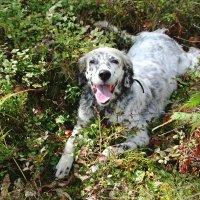 Счастливая собака) :: Инна Малявина