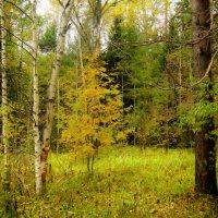 Есть в Осени первоначальной короткая,но дивная пора.. :: Алла Кочергина