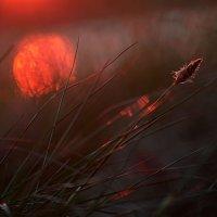 Sunrise :: Zelma Brezinska