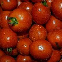 шарики помидорные :: Роза Бара