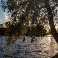 Осенний этюд 5 :: Юрий Бутусов