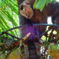 обезьяна :: Таня